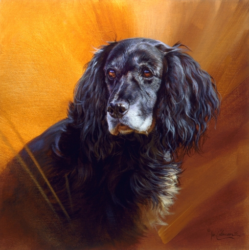 Commissions Spaniel by Ian Coleman 2006