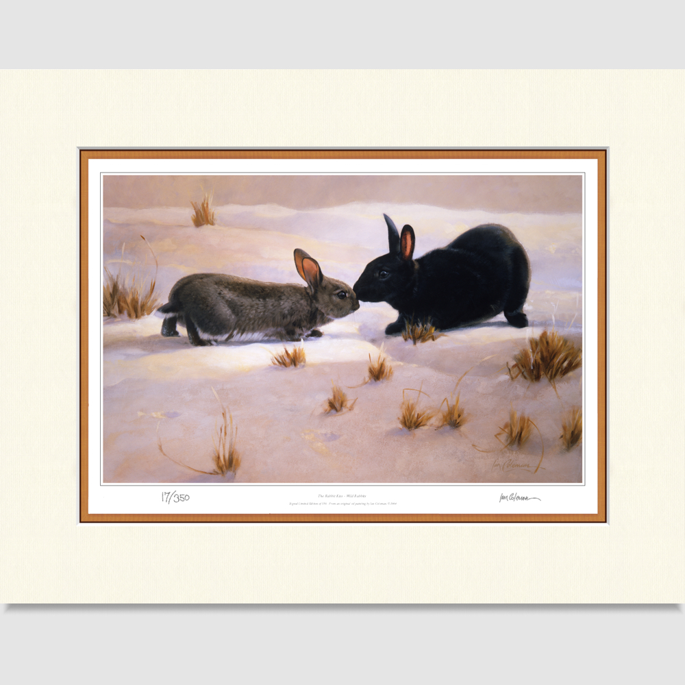 rabbits-large-print