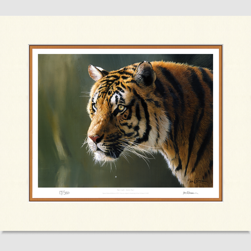 tiger-light-large-print