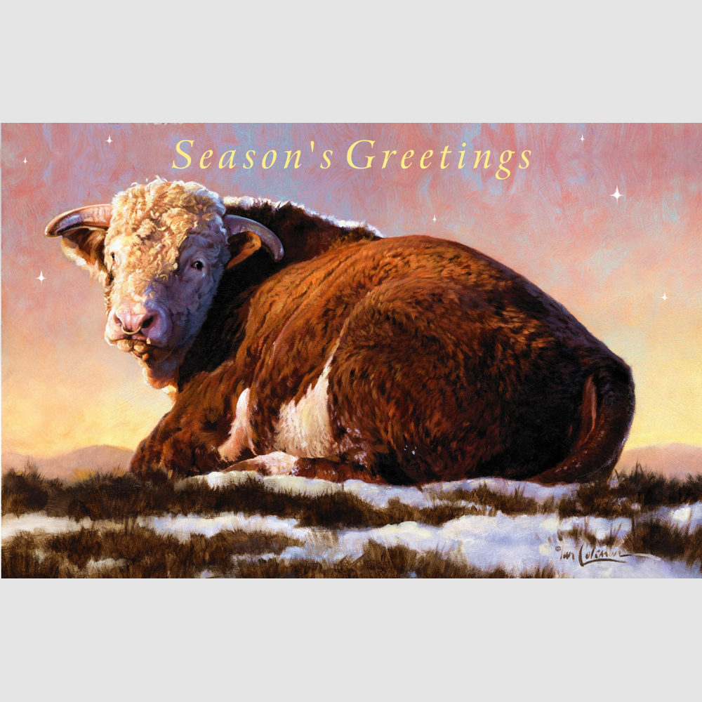 Christmas Cards – 5 or 10 Pack of Hereford Bulls 18 x 12cm – Coleman ...