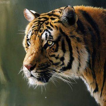 Mammals (13)