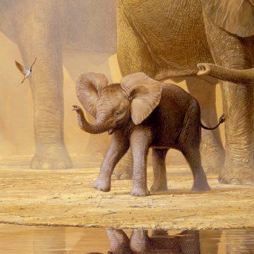 Elephants and Namaqua Doves