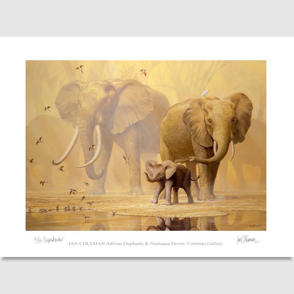 elephant-full-image-poster