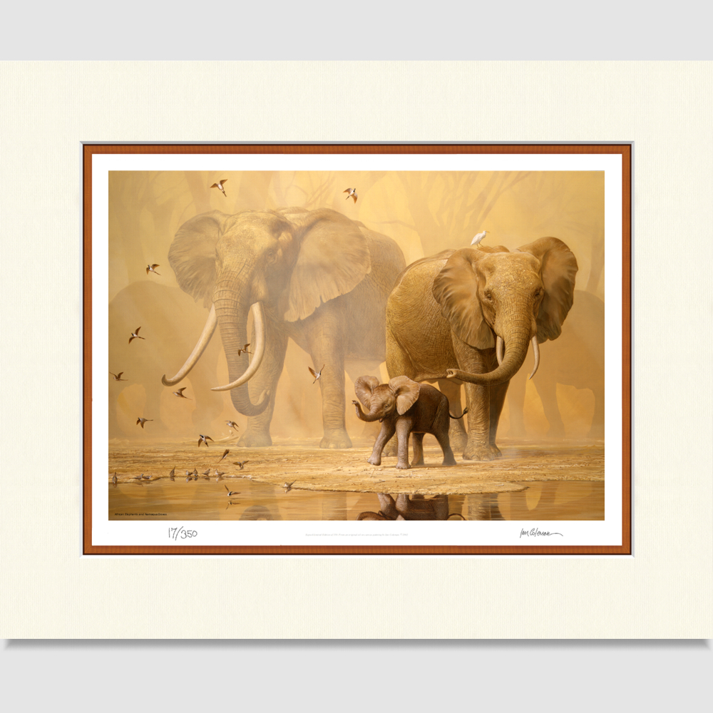 elephants-large-print