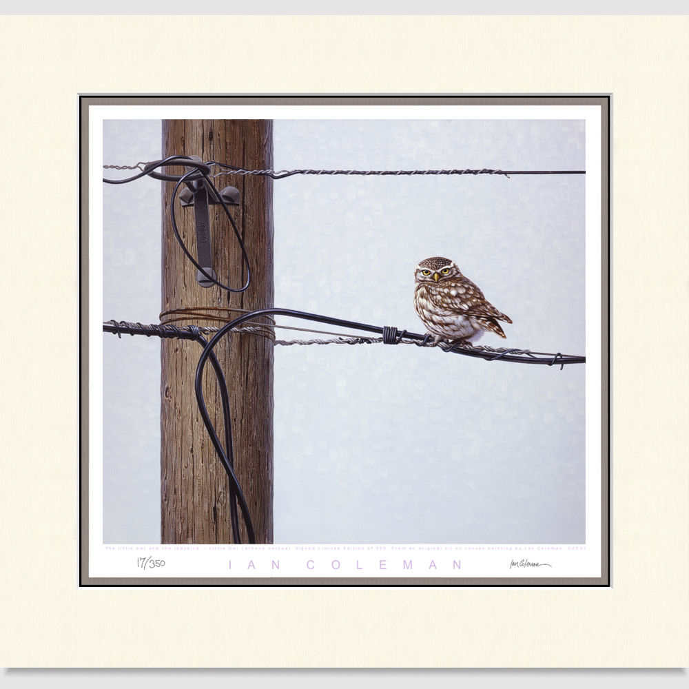 little-owl-large-print-by-ian-coleman