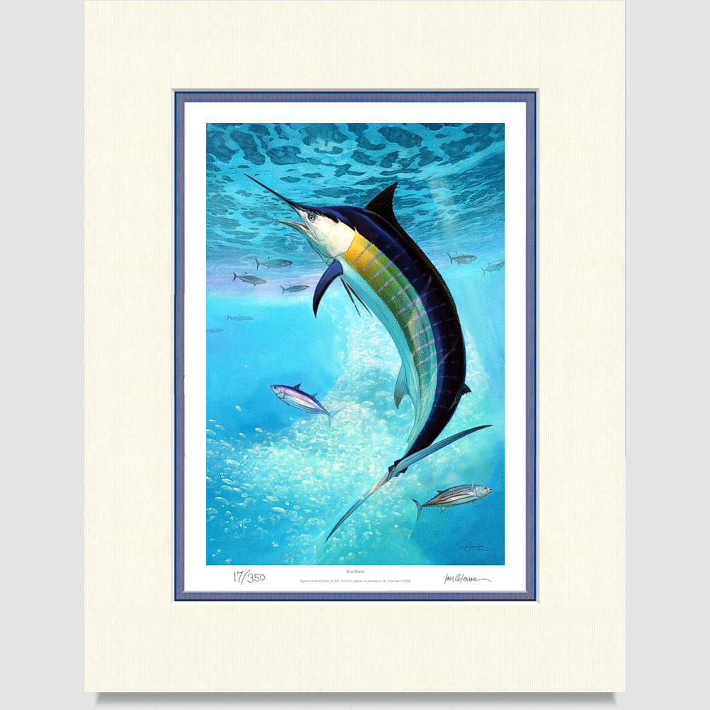 marlin-large-print-by-ian-coleman