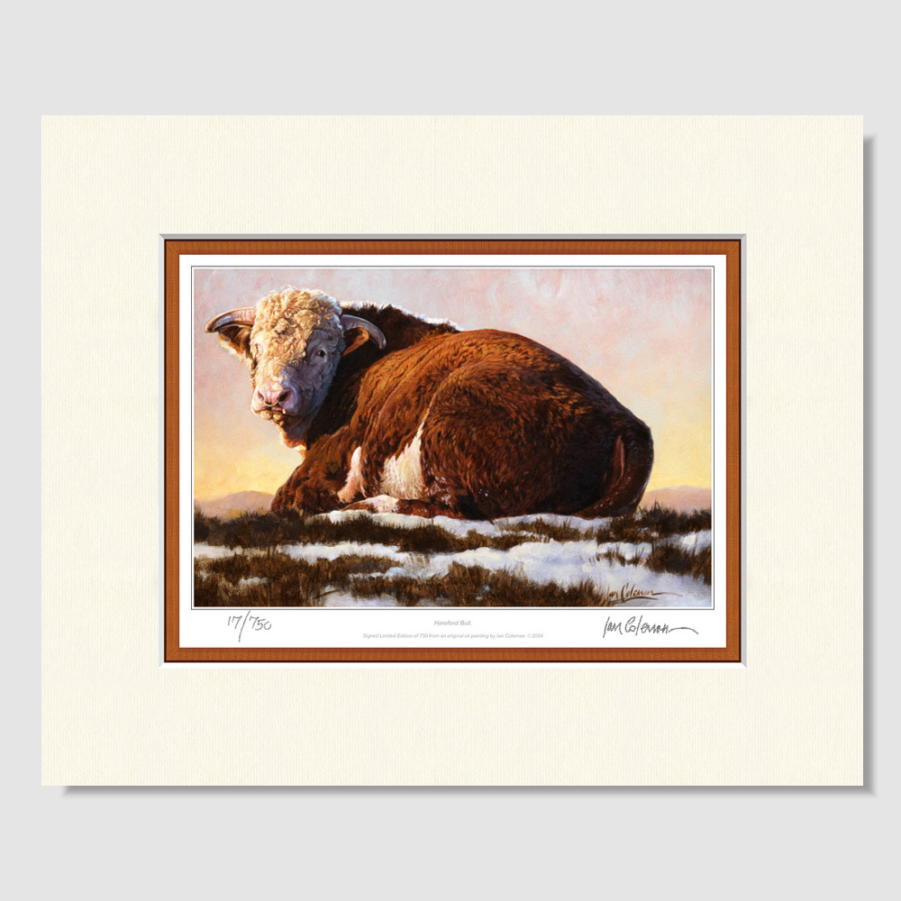small-paper-print-hereford-bull-by-ian-coleman