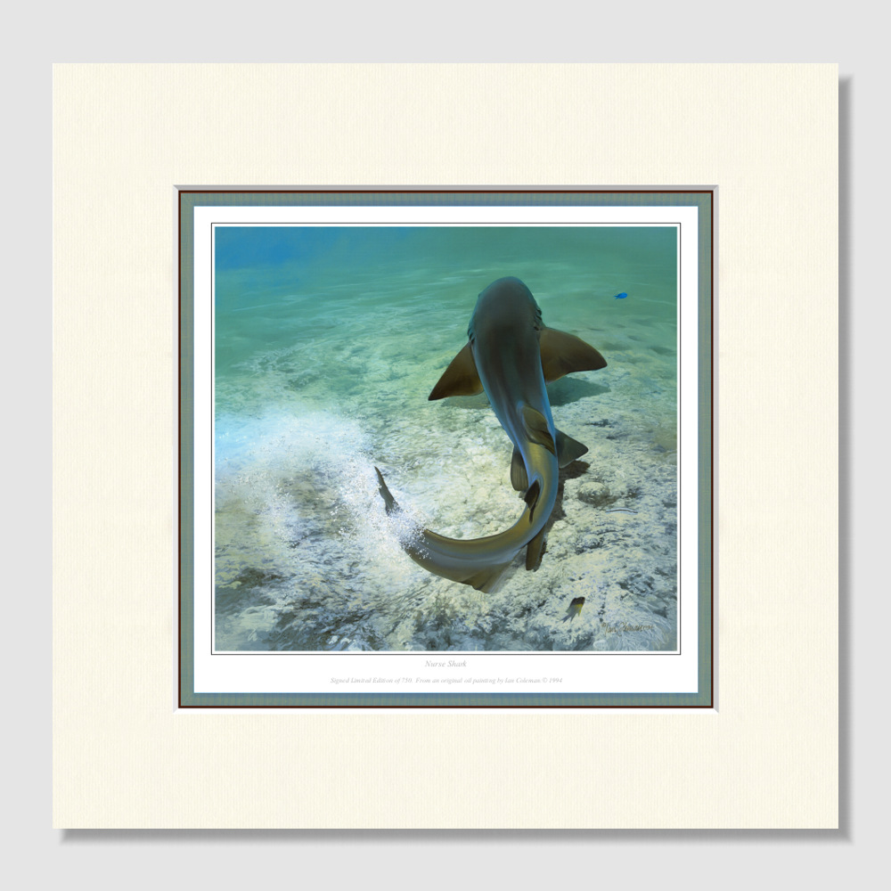 small-paper-print-nurse-shark