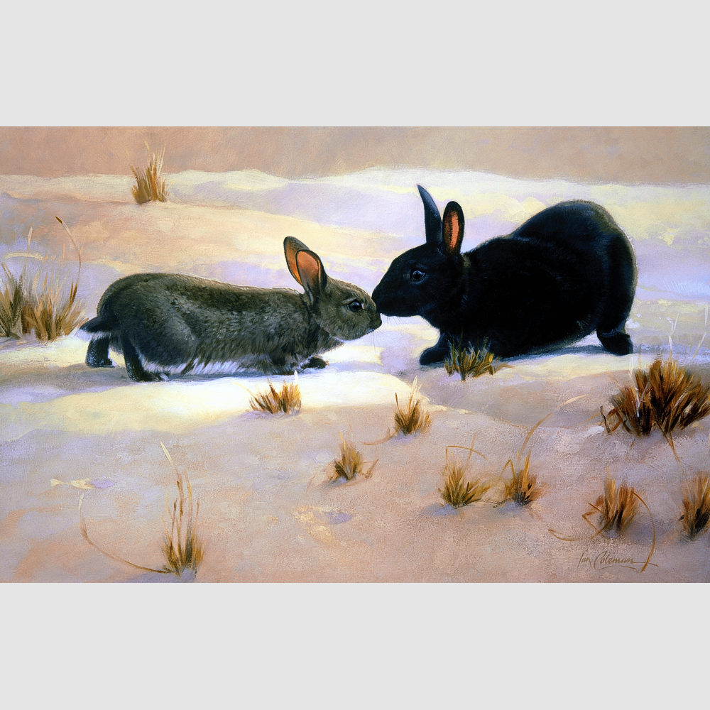 wild-rabbits-the-kiss-by-ian-coleman-1k-square