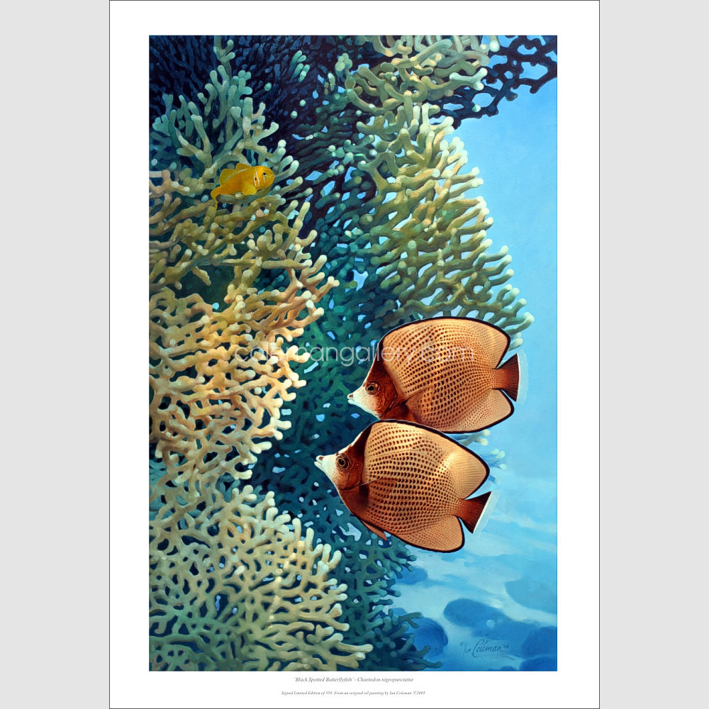 Black spotted Butterflyfish print by Ian Coleman