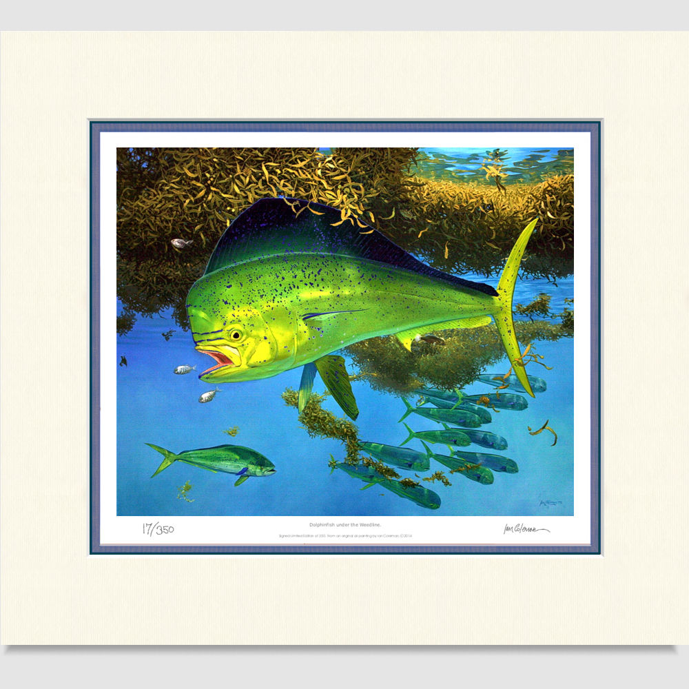 dolphinfish-large-print-by-ian-coleman