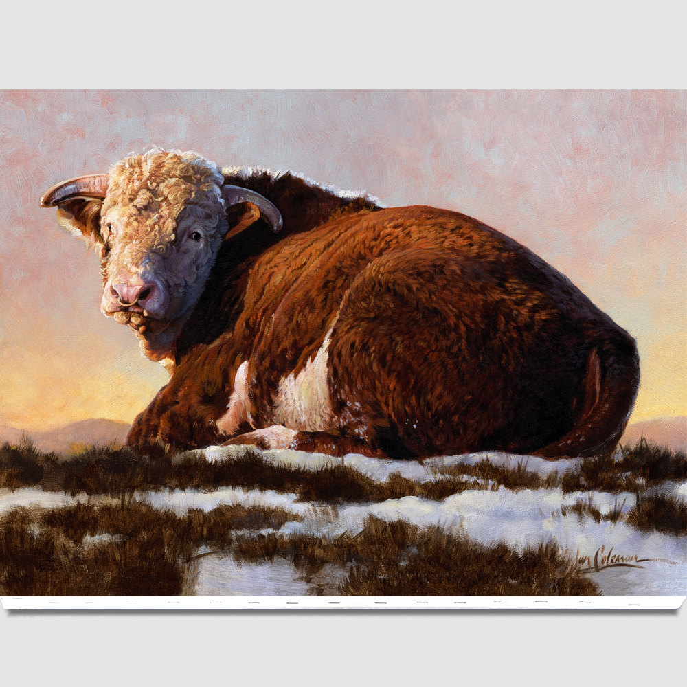 hereford-bull-canvas