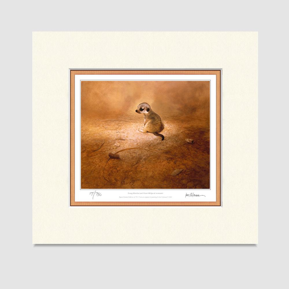 meerkat-small-prints