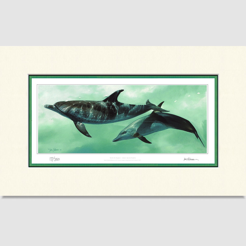 mother-and-daughter-spotted-dolphins-large-print