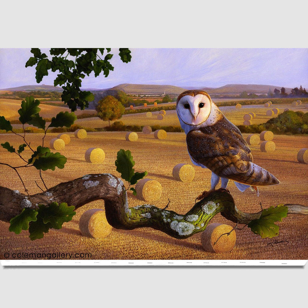 products-birds-barn-owl-canvas-by-ian-coleman