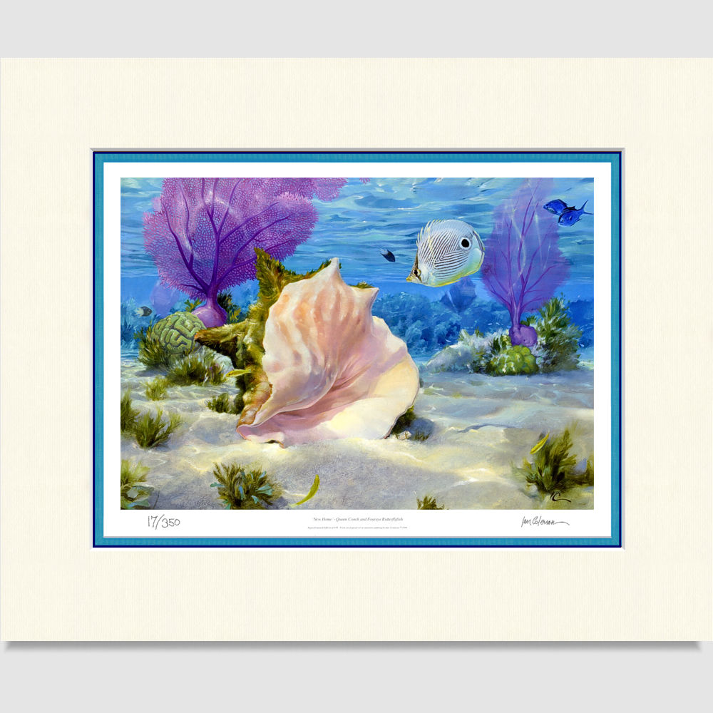 queen-conch-large-print-by-ian-coleman