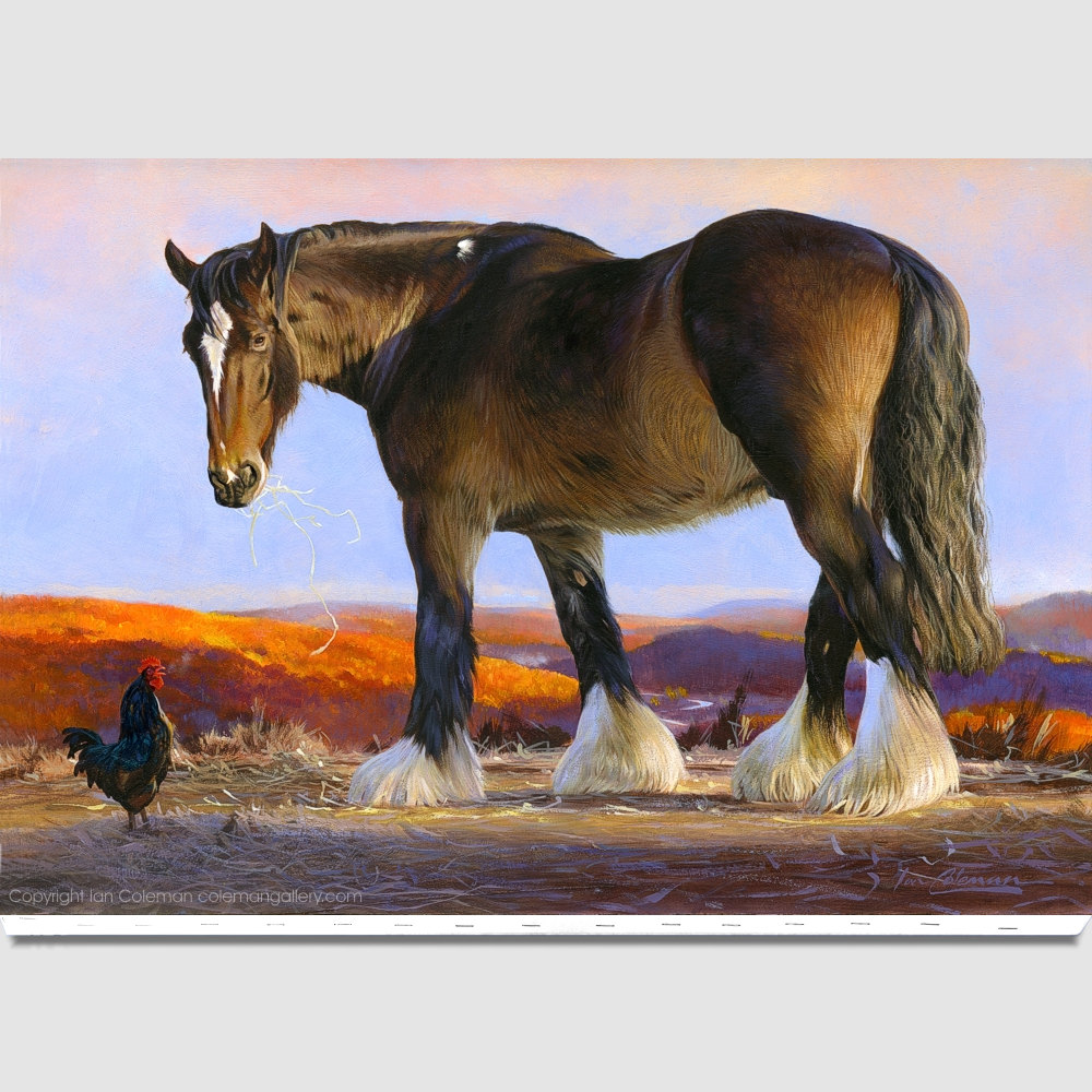 shire-horse-canvas