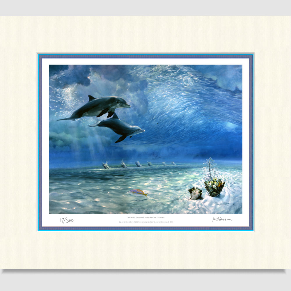 large-print-bottlenose-dolphins-under-the-big-swell-1k