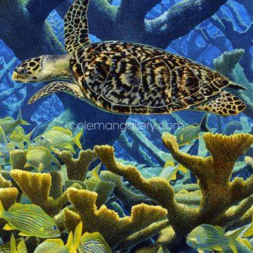 Hawksbill Turtle & Elkhorn Coral
