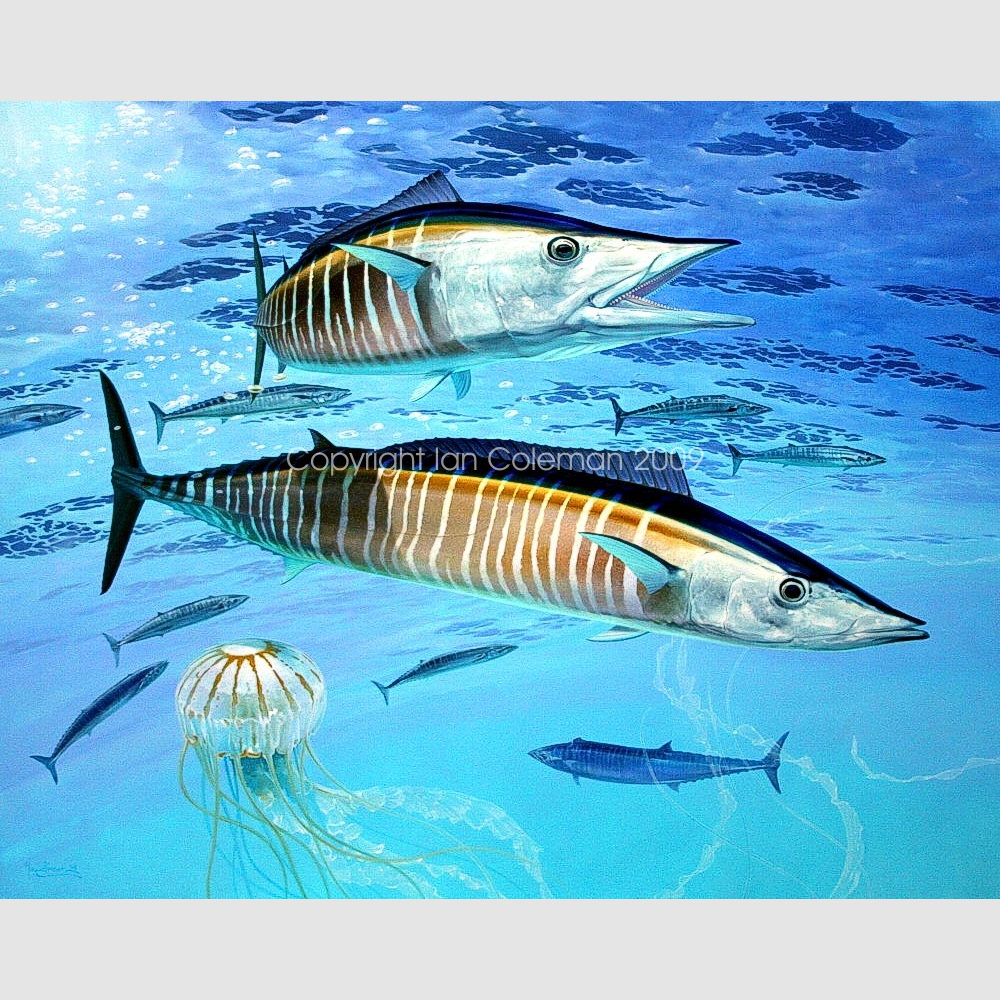 Wahoo by Ian Coleman Full colemangallery Copyright 2009